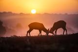 Deers in Richmond Park