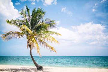 palm trees of the Caribbean