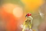 Ladybug looking parachute - 136533851
