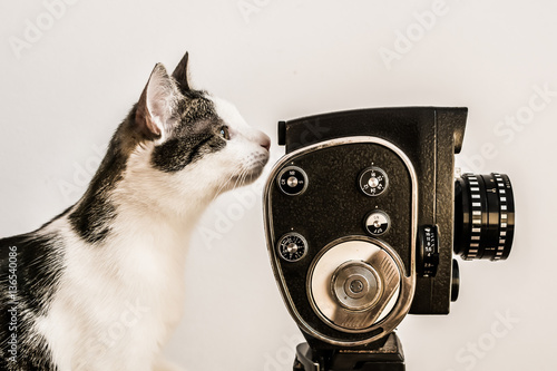 Poster White and gray cat looking into viewfinder of vintage camera