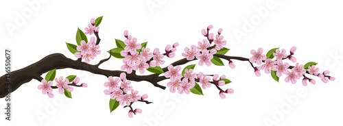 Wall mural Cherry tree branch with pink flower and green leaf. Illustration for horizontal spring banner and design, isolated on white
