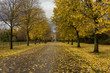 Autumn in London. As autumn comes to an end carpets of autumn leaves cover the ground and get satuarated by the rain.