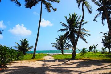 Martinique Anse Macabou