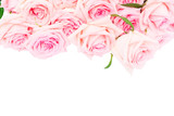 Pale pink blooming fresh blooming roses border isolated on white background