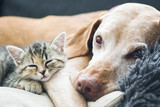Dog and small cat laying on a couch - 136579225