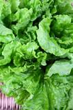Closeup green lettuce