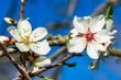 Frühling Baum Blüten romantisch