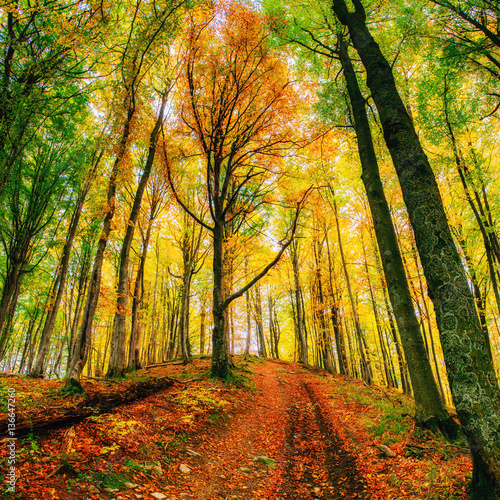 Forest Road in the autumn.  Landscape.