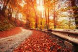 autumn alley. Dramatic morning scenery Carpathian Ukraine Europe