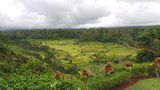 rizière balinéaise