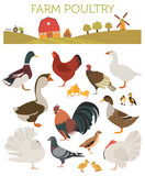 Poultry farming. Chicken, duck, goose, turkey, pigeon, quail ico