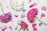 floral composition with hydrangea flowers