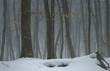 Hornbeam in winter
