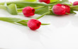 Red tulips on white background - 136697496