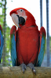 Macaw parrot in the zoo