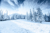 Winter tree in snow. Carpathian, Ukraine, Europe. Bokeh light ef