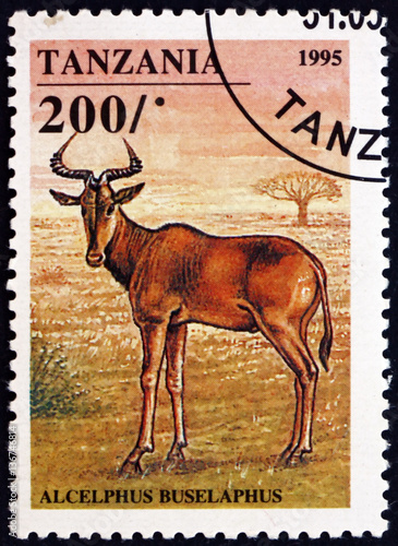 Postage stamp Tanzania 1995 Hartebeest, African antelope