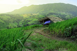 Cottage in rice fields farm