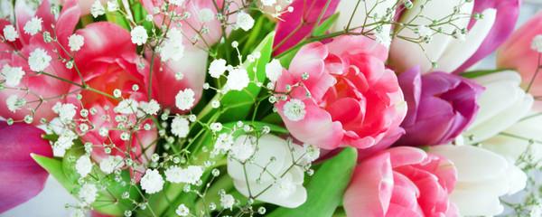 Tulpen - Banner
