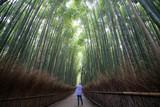 Bamboo forest at Sagano Arashiyama,Kyoto,tourism of japan