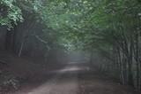 Camino en el bosque oscuro