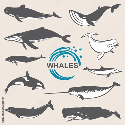 collection of various whales species images