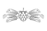black illustration of hop and barley ear for brewing - 136839891
