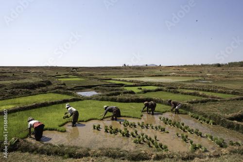 In de dag Rijstvelden rizière Madagascar