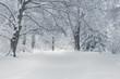Hidden in the Snow
