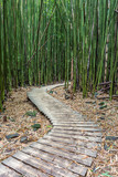 Hiking through the Bamboo forest on the way to Waimoku falls in Haleakala National Park, Maui, Hawaii