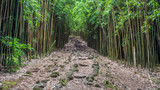 One of my favourite hike on the tropical island of Maui, Hawaii. The walk to Waimoku Falls through the Bamboo forest is magical.