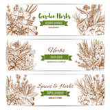 Spice and garden herbs sketch banner set
