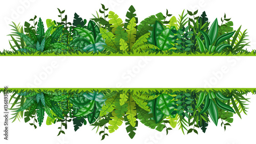 Fototapeta Illustration of a tropical rainforest banner