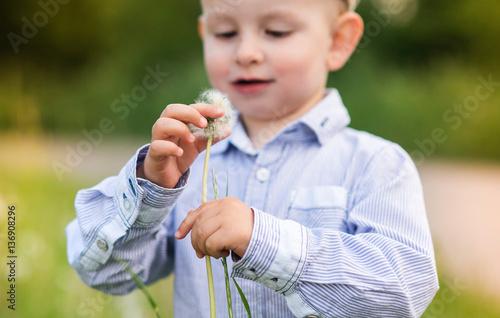 Little boy blowing dandelion. Sunny summer