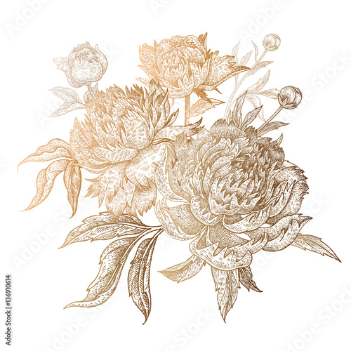 Golden peonies on a white background. - 136910614