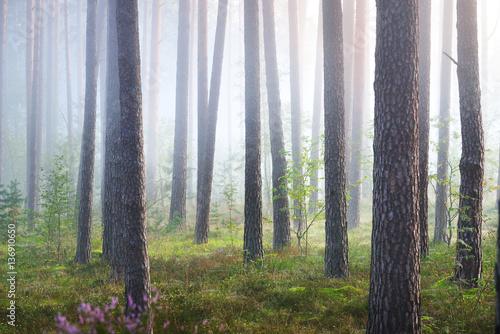 mglisty-wschod-slonca-w-pieknym-lesie-lisciastym-w