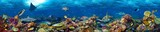 colorful super wide underwater coral reef panorama  banner background with many fishes turtle shark and marine life - 136920677