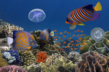 Underwater image of coral reef and tropical fishes - 136931680