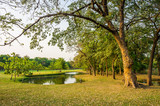 Trees, pond and green grass in public park for relaxation and leisure. This area is in Bangkok city.