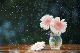 Beautiful Gerbera daisy flowers in vase on wooden table outdoors under the rain, vintage filter