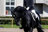 Portrait of black sport horse during show - 136973843