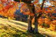 Forest Road in the autumn Landscape. Ukraine Europe
