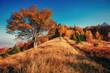 Forest Road in the autumn. Landscape. Ukraine Europe