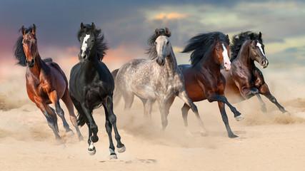 Galop koni