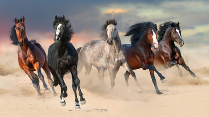 Horse herd run gallop on desert dust against beautiful sunset sky