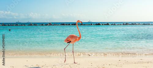 Flamingo on the beach. Aruba island - 136994815