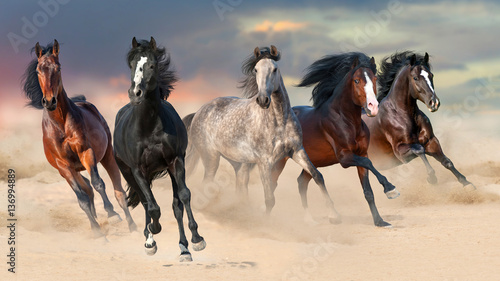 Fototapeta Horse herd run gallop on desert dust against beautiful sunset sky
