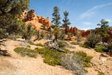 hoodoos near bryce cANYON