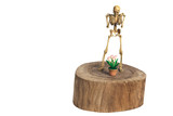 Skeletons stand on wood with flowerpot. Clipping path