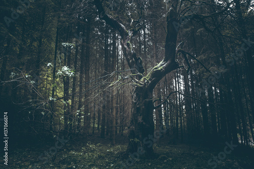 Fotobehang Betoverde Bos Creepy old tree in dark foggy forest